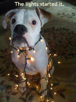 Funny & Cute Christmas Dog Pics