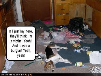 Fat Cat Dog Toys Cat Burglar