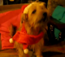 Jingle Bells Cats And Dogs Singing