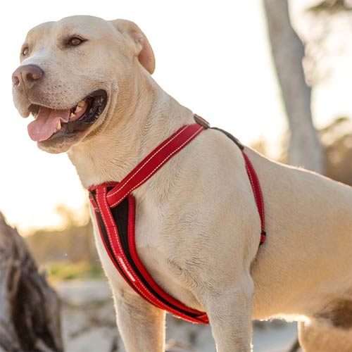 Ezydog Chest Plate Dog Harness With Seat Belt Loop